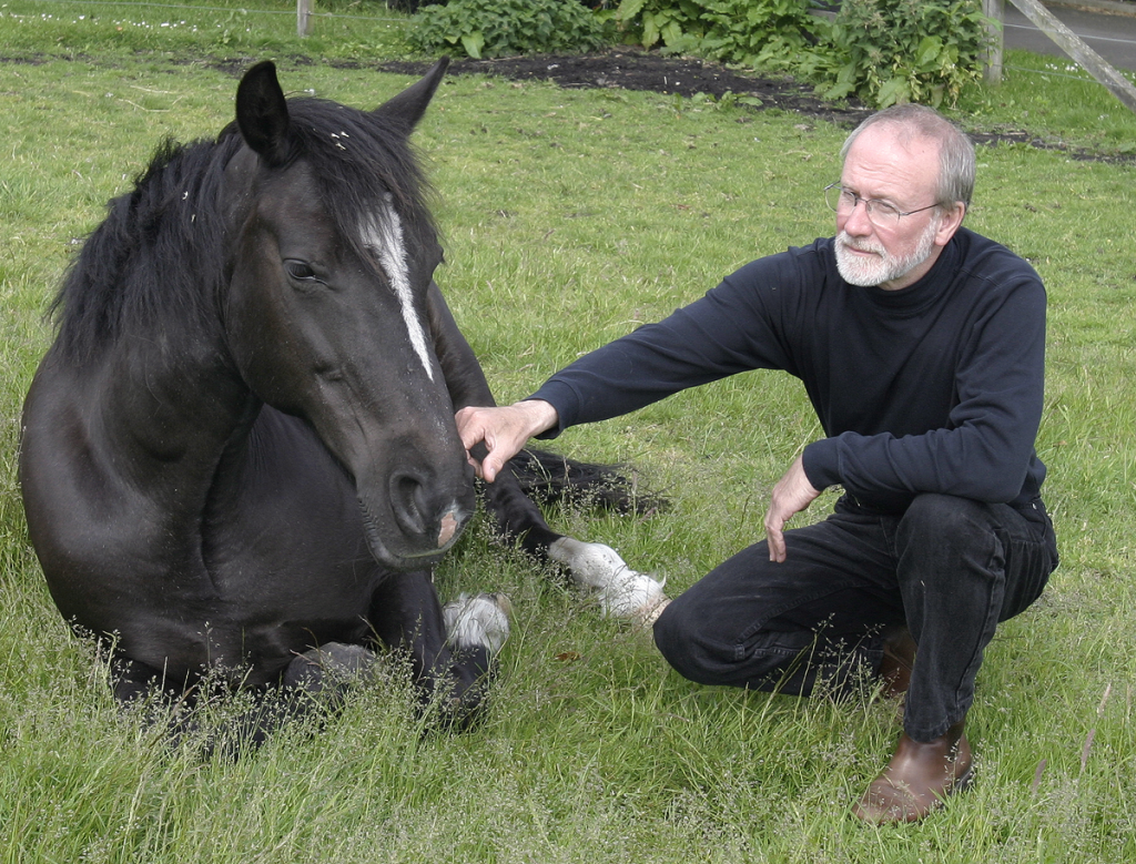 horses' needs