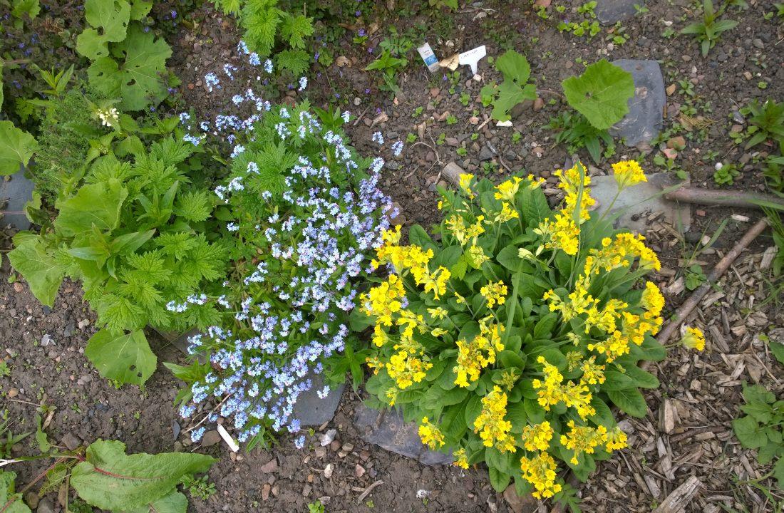 Blackford Medicine Garden
